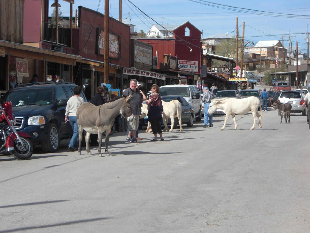 Burros Roaming The Streets Looking For Carrots