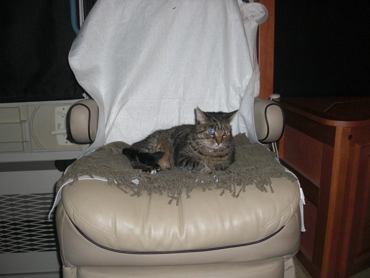 Whisper On Passenger Chair Deciding If He Wants To Sleep