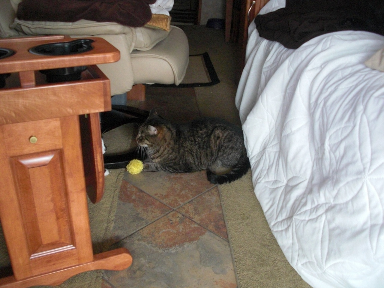 Whisper Laying In Middle Of Hallway, With His Ball, While We're Traveling Down The Road.  BK's Nose Is Right In Front Of Whisper.