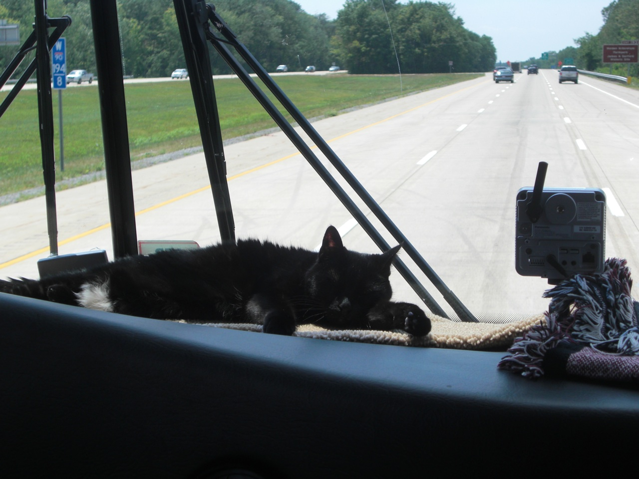 Angel Sleeping On The Dash While We Are Driving Down The Road