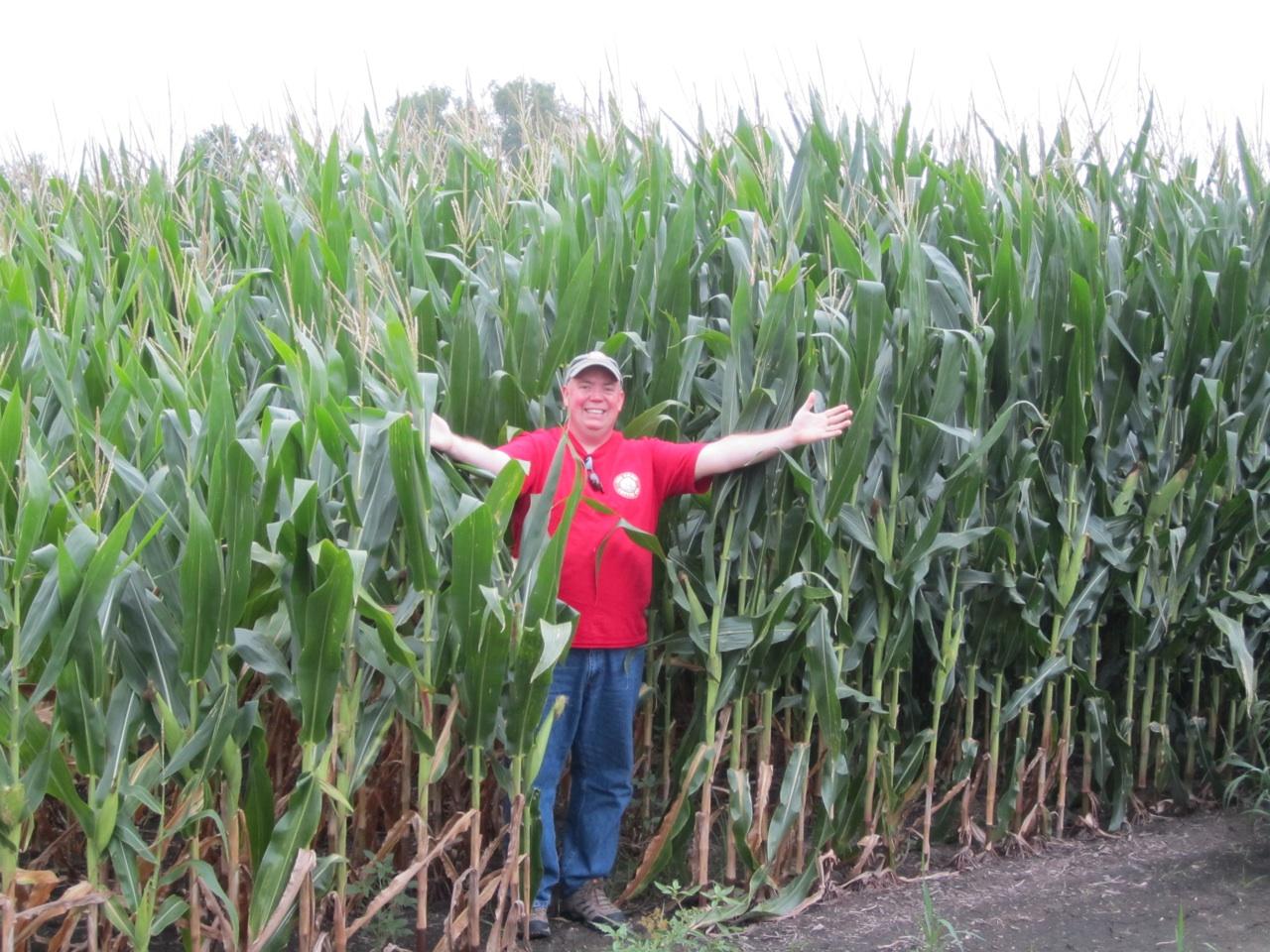 David In The Giant Corn In Amana, Iowa