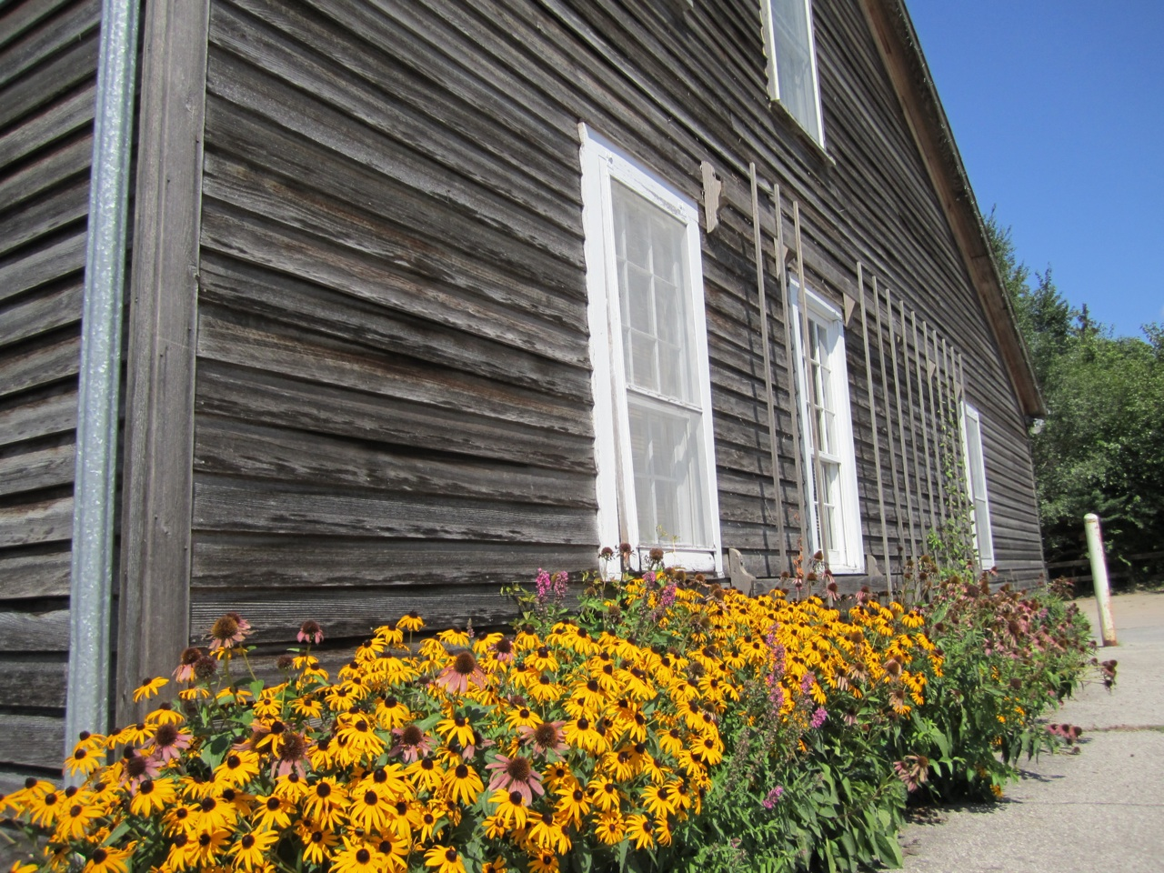 Nice Flower Garden On The Side Of A House.  Note The Grape Vine Trellis On The Side, Which Is On Every House.