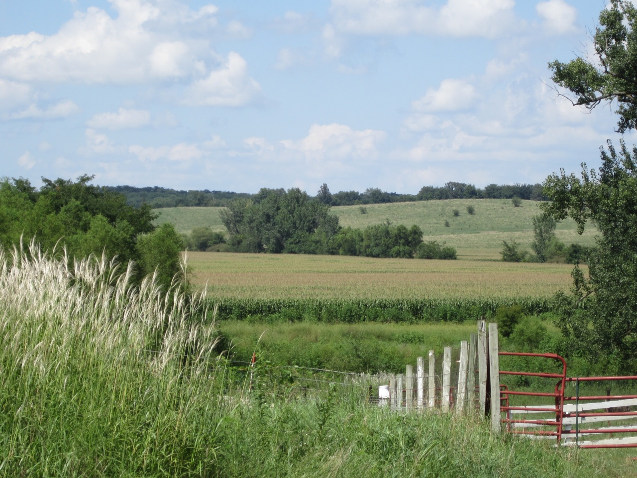 Nice Amana, Iowa Countryside.  Fields And Fields Of Corn.