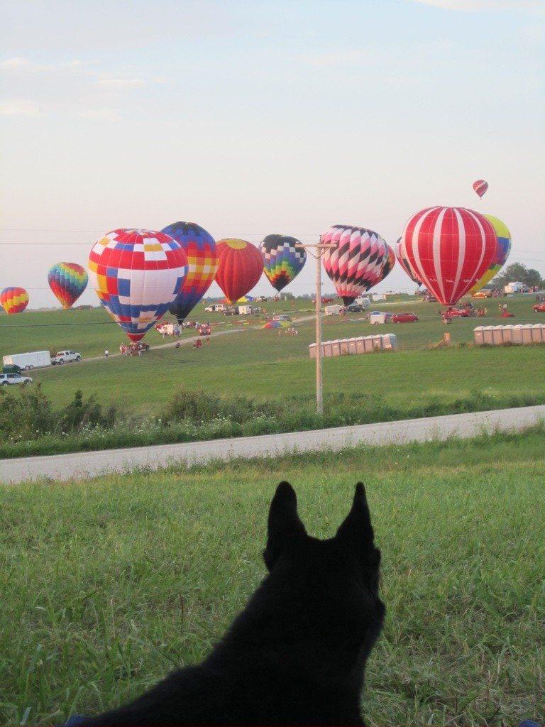 Tasha Watching The Hot Air Balloons