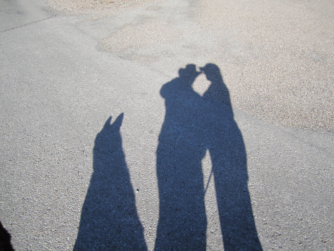 Shadows Of David, Brenda and Tasha