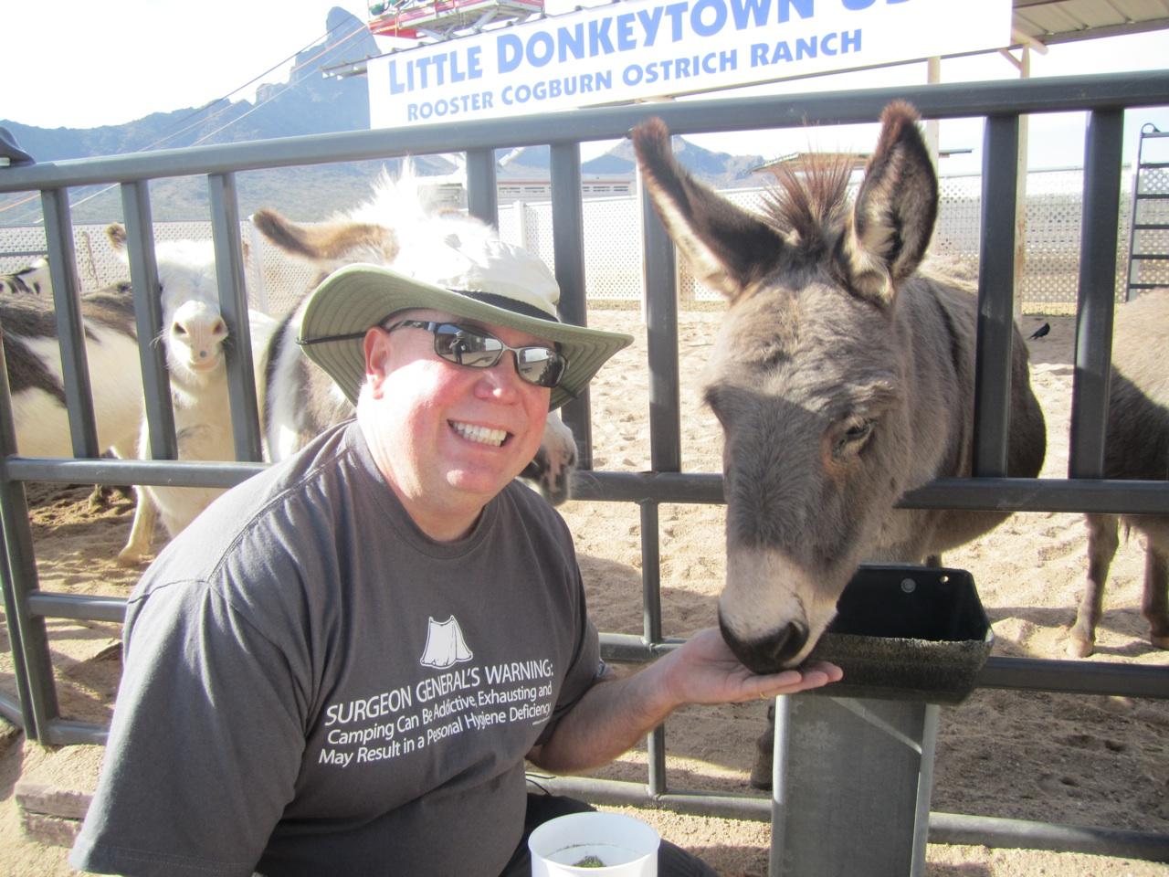 David Feeding The Donkeys