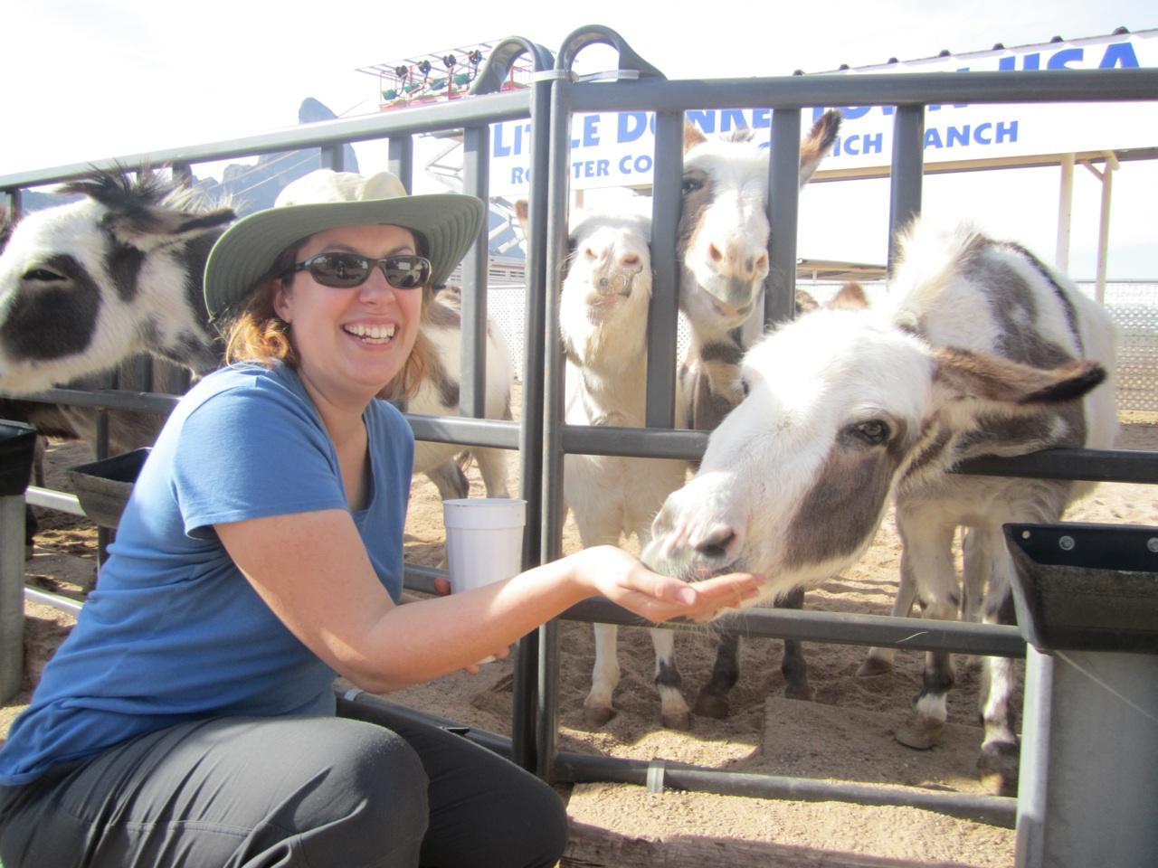 Brenda Feeding The Donkeys