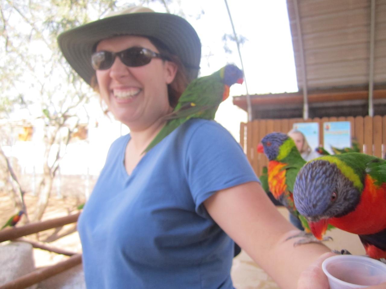 Brenda Feeding The Rainbow Lorikeets