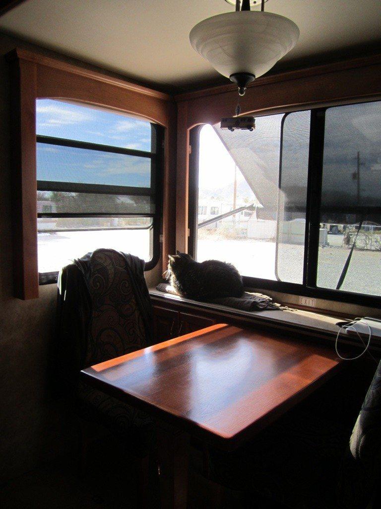 Whisper Enjoying The Sun And Fresh Air At Quartzsite, AZ