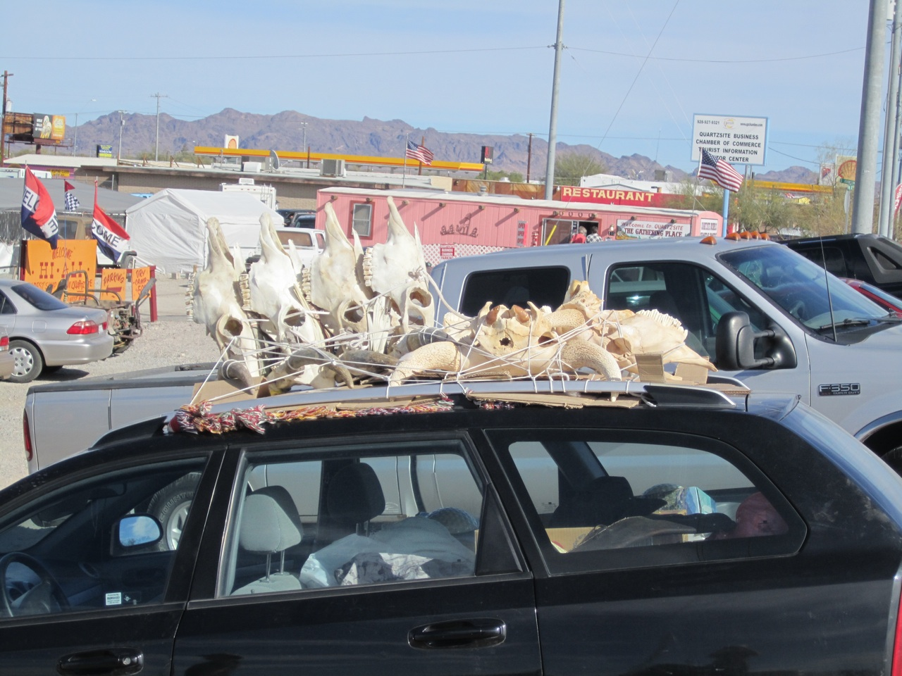 Skulls On Top Of A Car. Only Out West You Would See Something Like This. I Know This Is Not Something I'd Like To See Driving Down The Road.