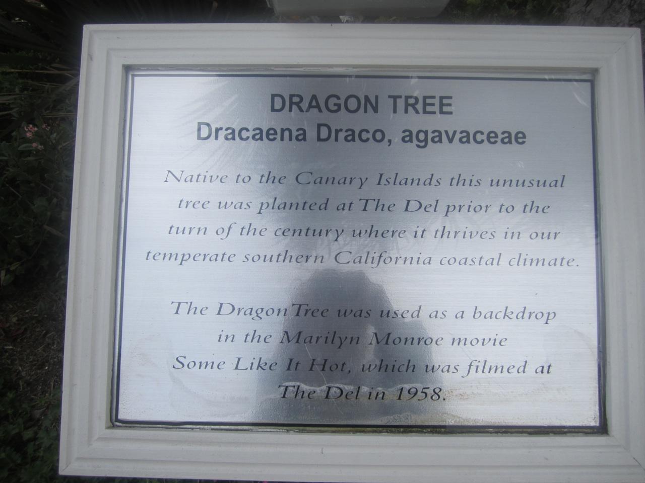 Dragon Tree Plaque