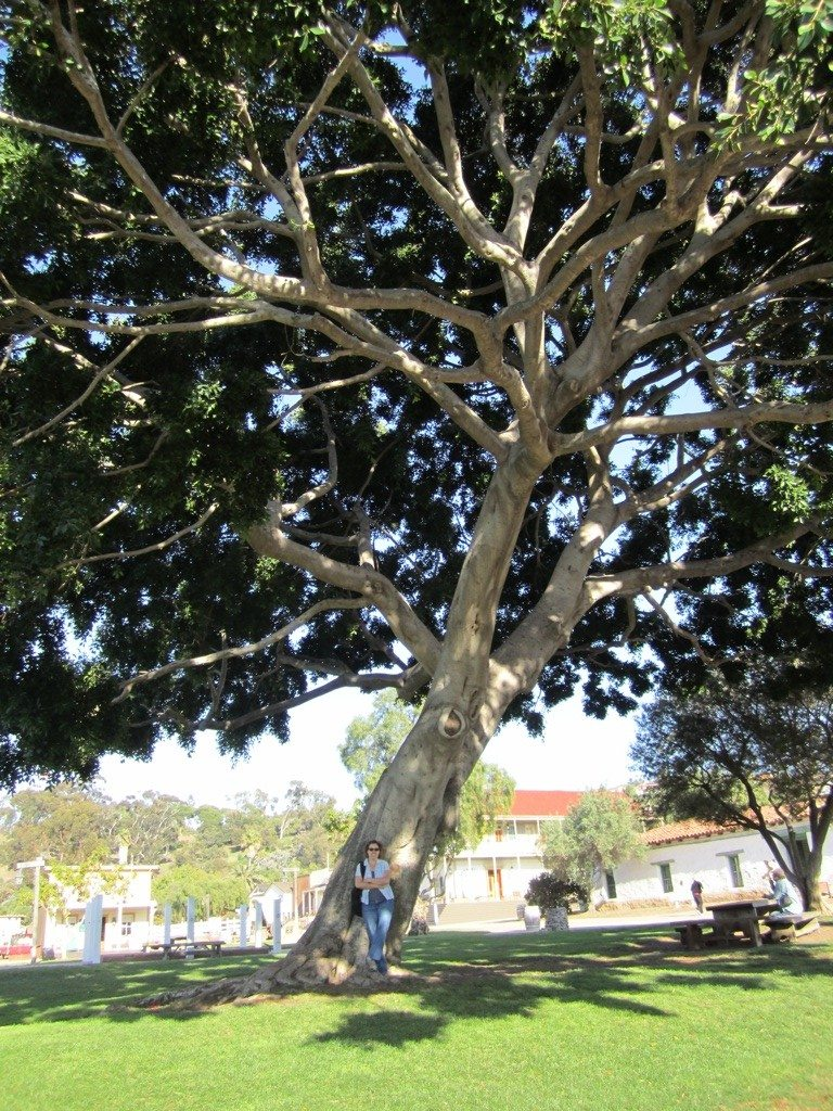 Brenda Under A Big Giant Tree In The Plaza