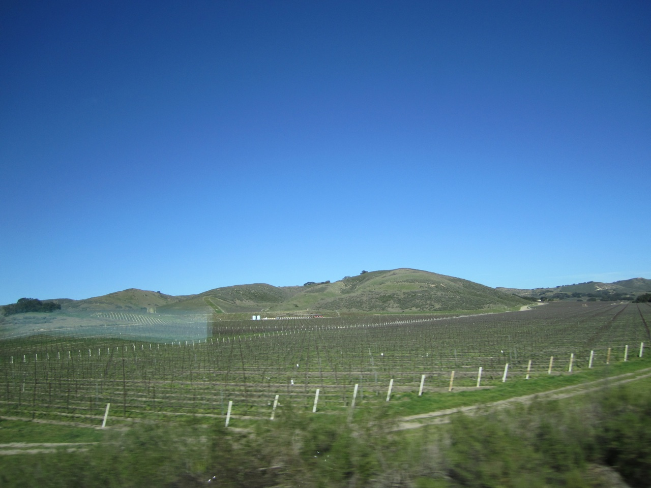 Rows And Rows Of Vines For The Wineries