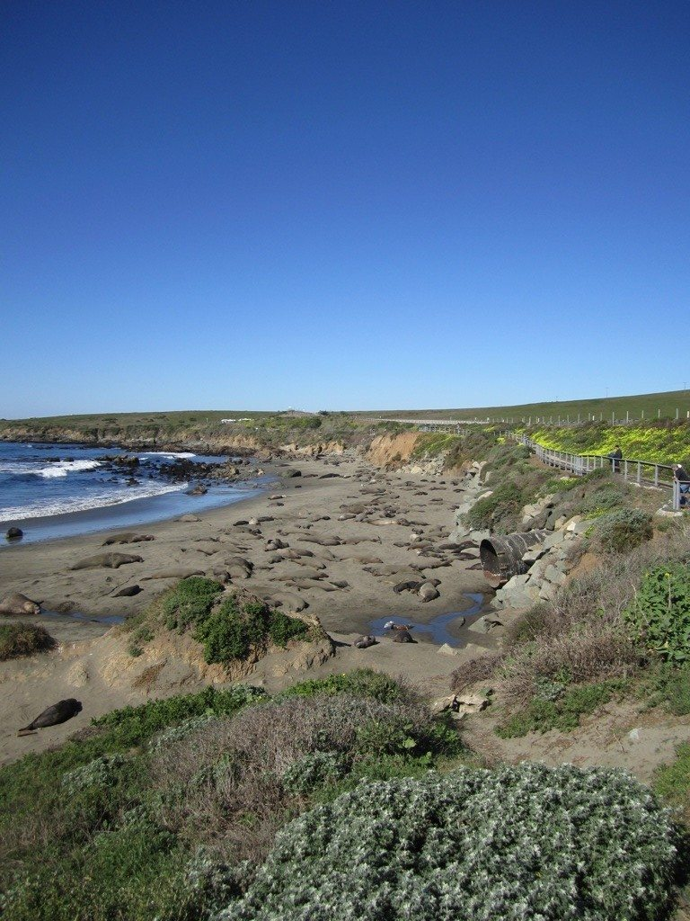 Our First Look At The Elephant Seals Sun Bathing, Breeding And Birthing.