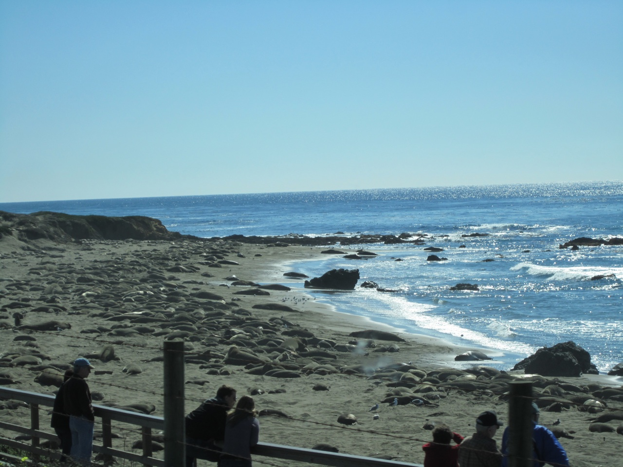 The Elephant Seals On The Beach