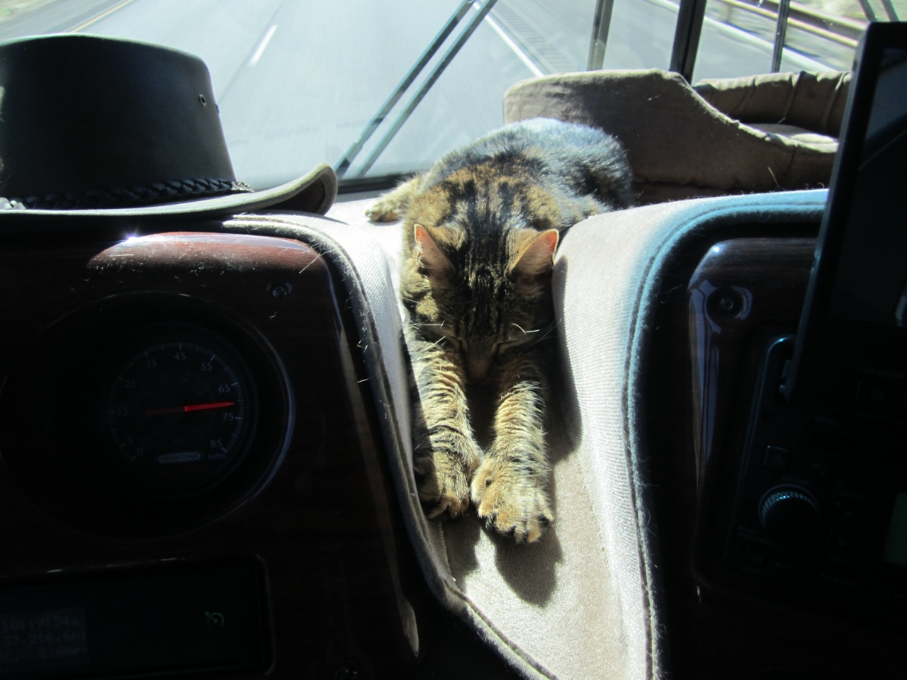 Tory Sleeping On The Dash While We Are Driving Down The Road