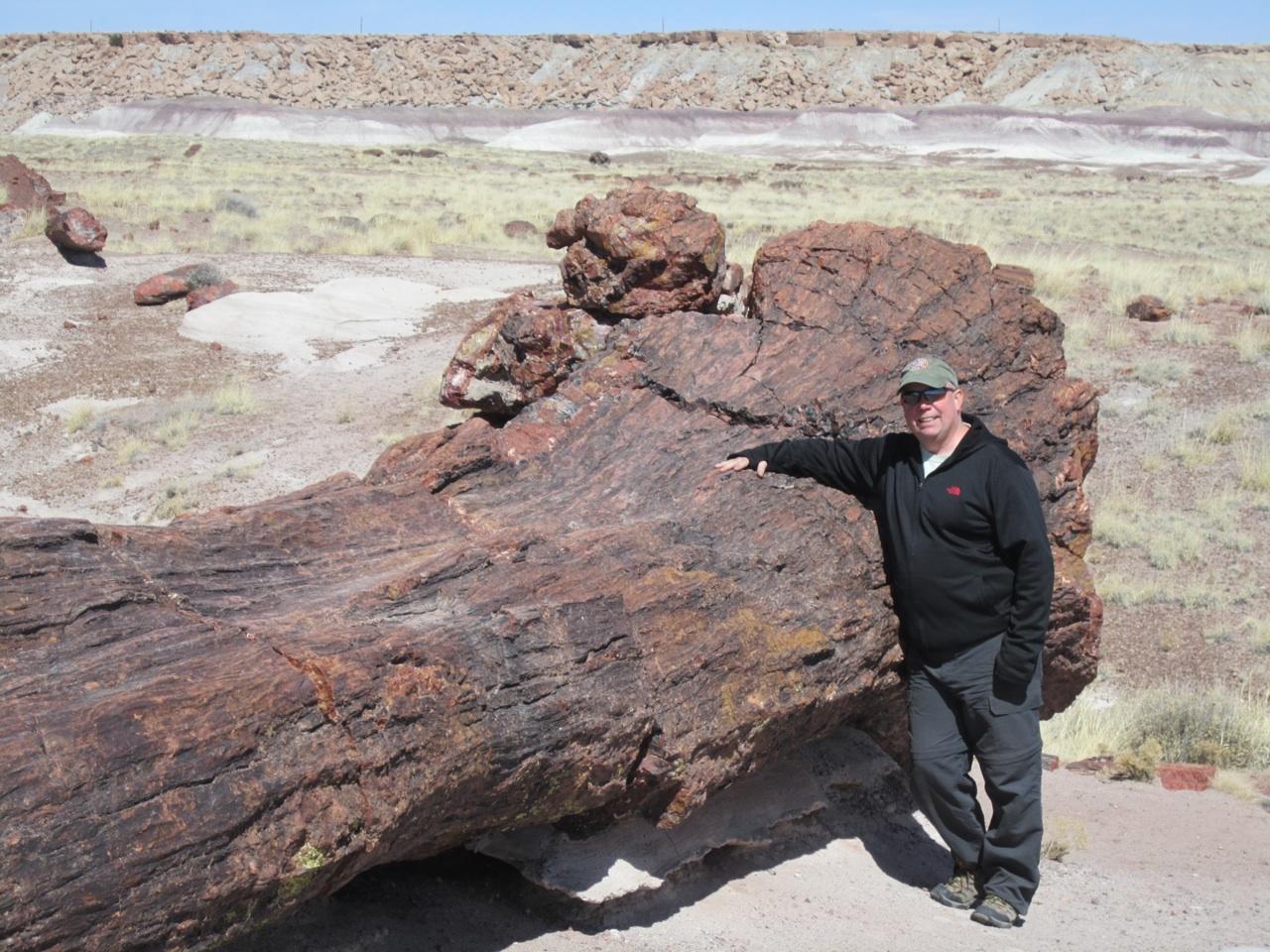 David And A Giant Petrified Tree