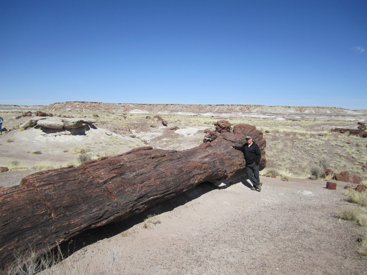 David And The Same Petrified Tree, Shows You How Long And Big This Tree Was