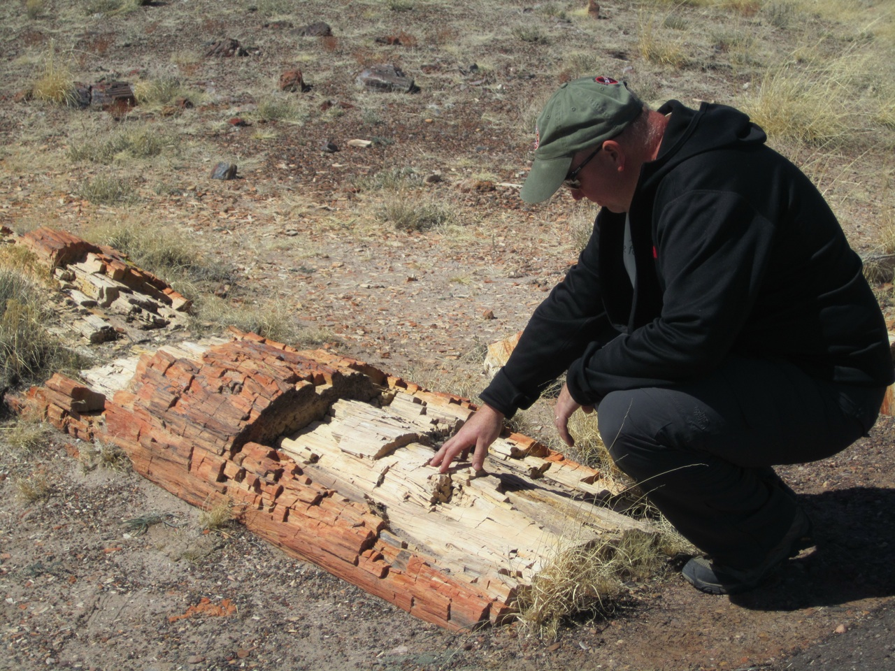 David And Petrified Wood