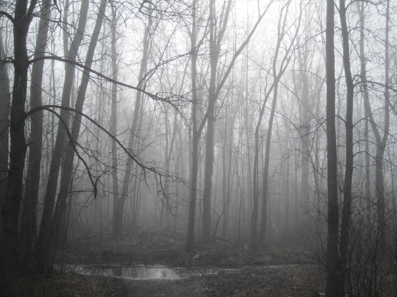 The Woods Next To Our House, In The Foggy Morning