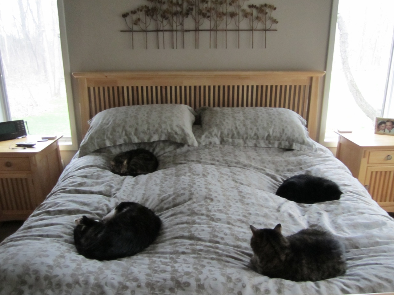 All Four Kitties Sound Asleep On The Bed