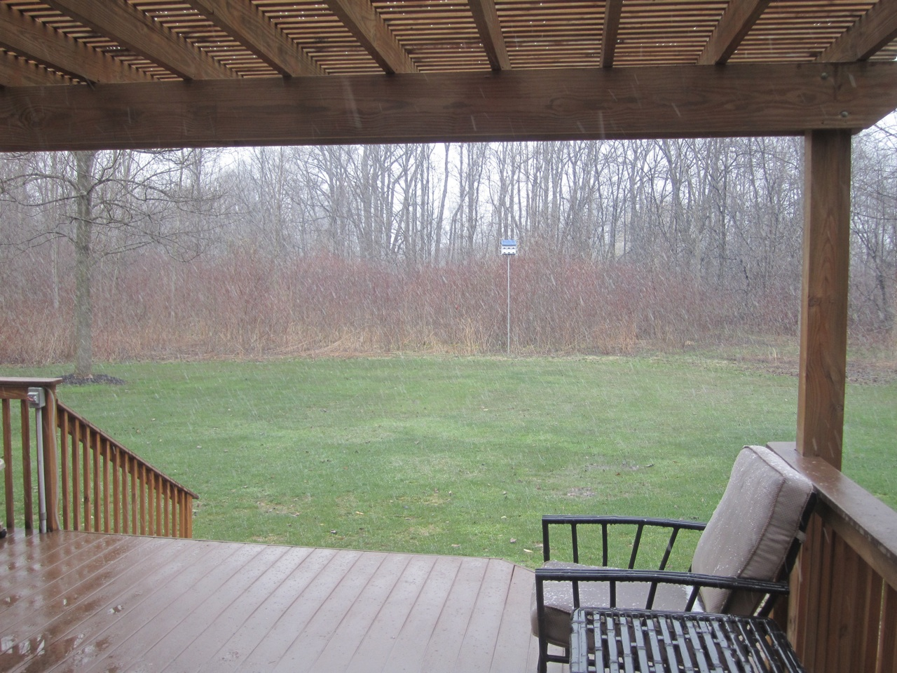 Snowing In Our Backyard