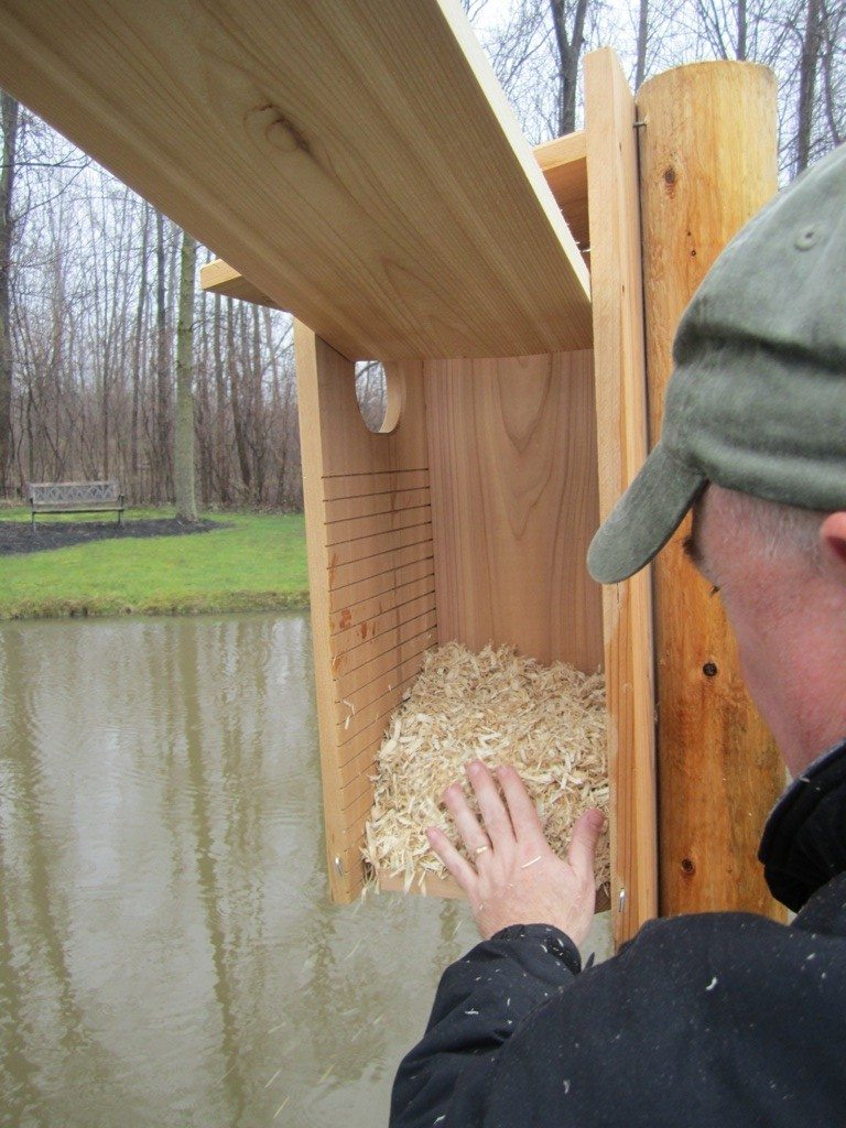 David Adding The Bedding To The Wood Duck Nesting Box