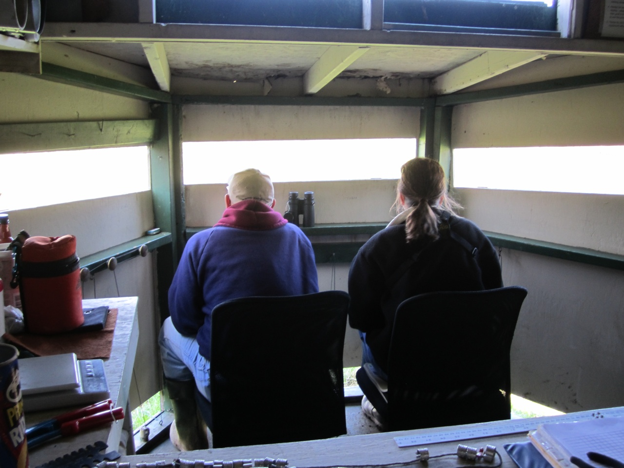 The Two Volunteers Searching For, Capturing and Banding The Hawks