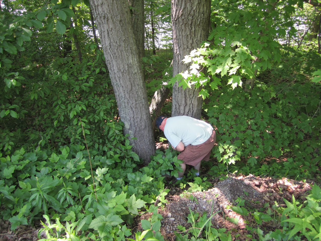 David Finding A Geocache In Keuka Lake State Park...Amunst The Poison Ivy.  Luckily We Did Not Get Infected.