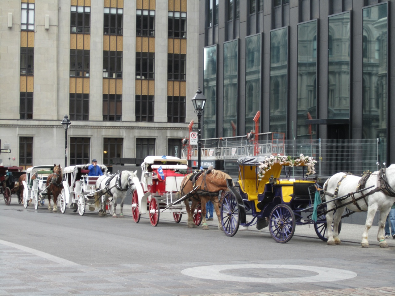 Horse And Buggies For Tours