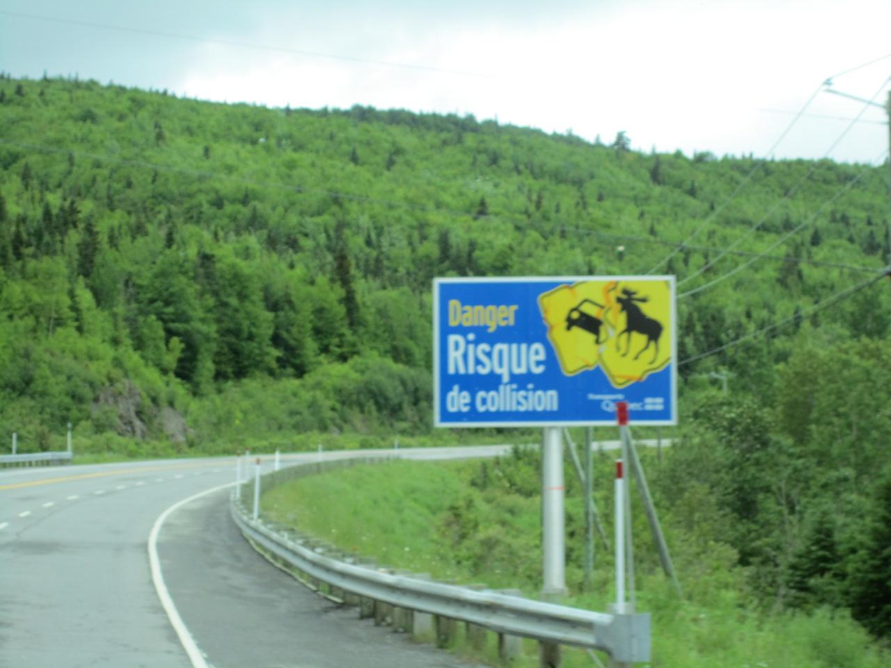 Moose Hitting Car Sign