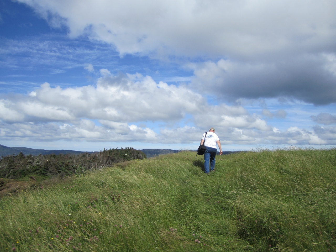 David In The Tall Grass On A Hike On Bell Island