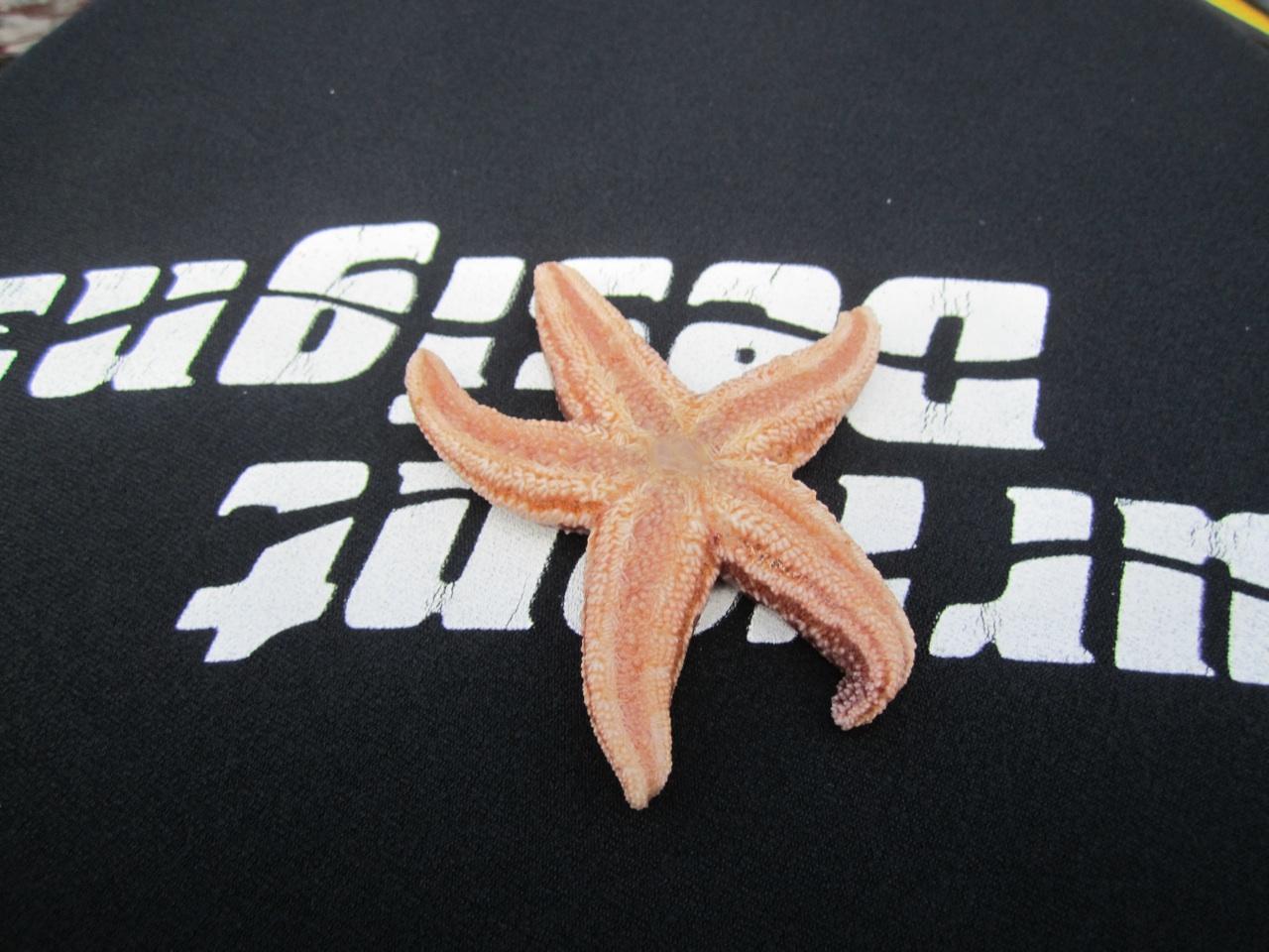 One Of The Starfish