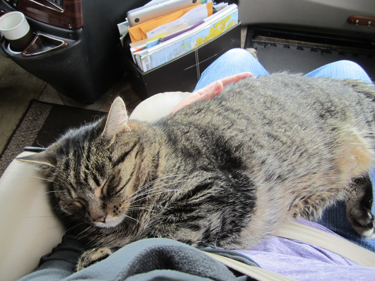 Whisper Completely Sound Asleep In My Lap While David Is Driving Down The Road