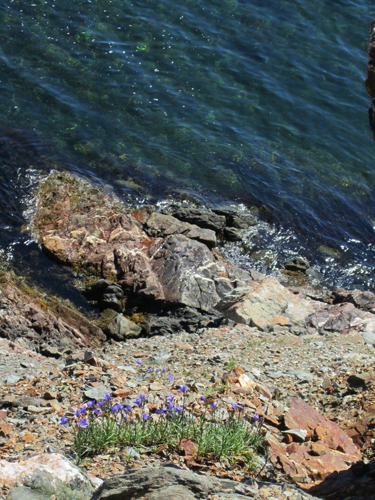 A Rocky Edge, Wild Flowers And The Bay
