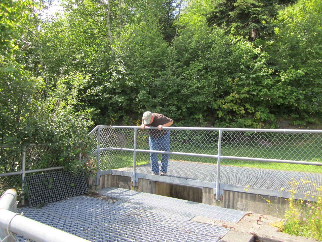 David Watching The Salmon Swim Up-Stream Using The Fish Ladders Through The Re-Routed Waterway.