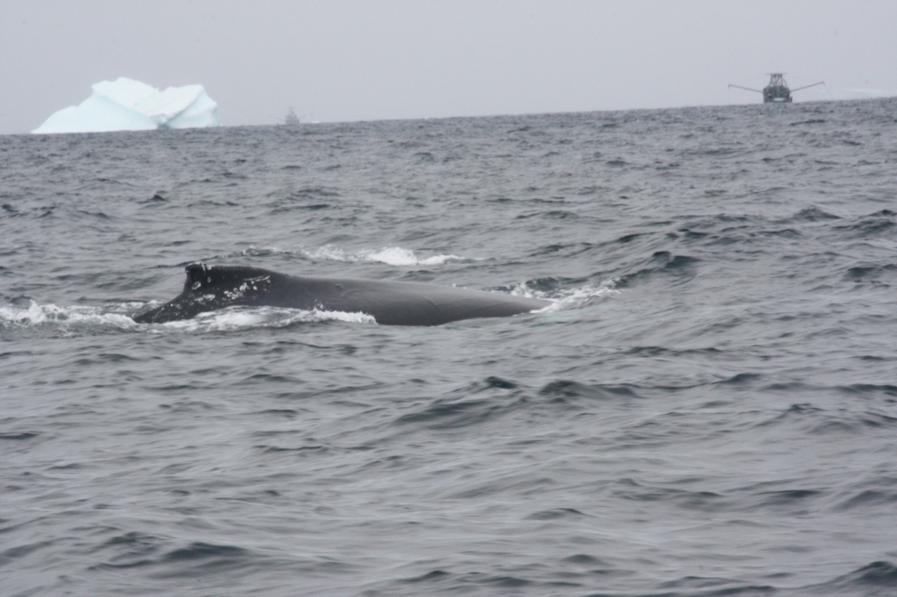Whale, Iceberg And Fishing Boat