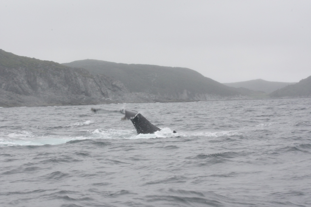 Whale Tail Flipping