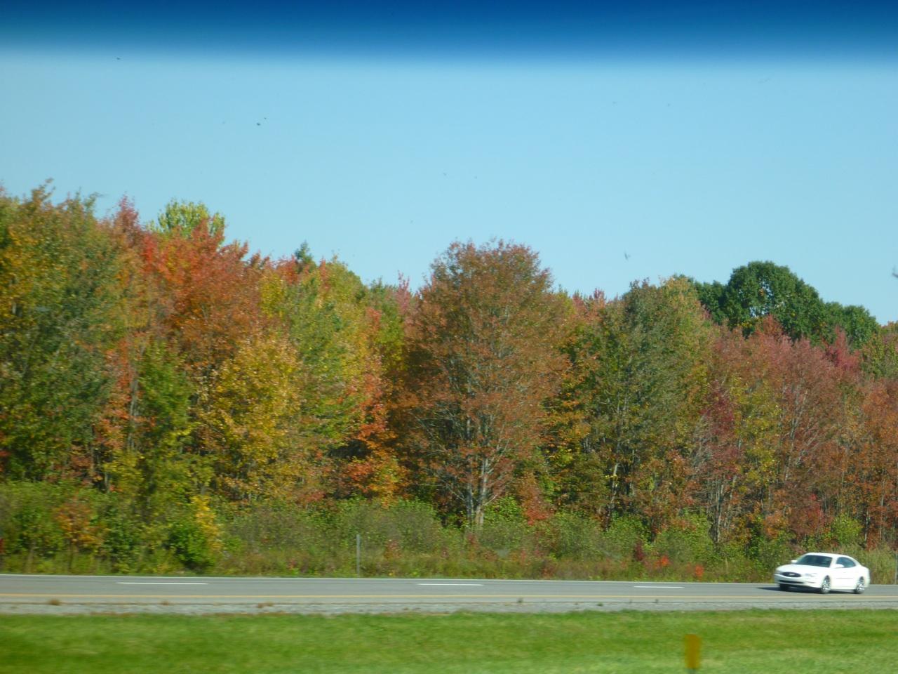 Fall Colors In Full Bloom