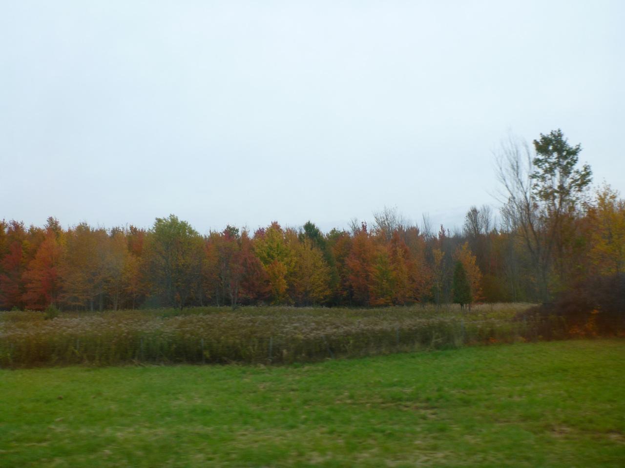 Fall Colors Along The Roadside