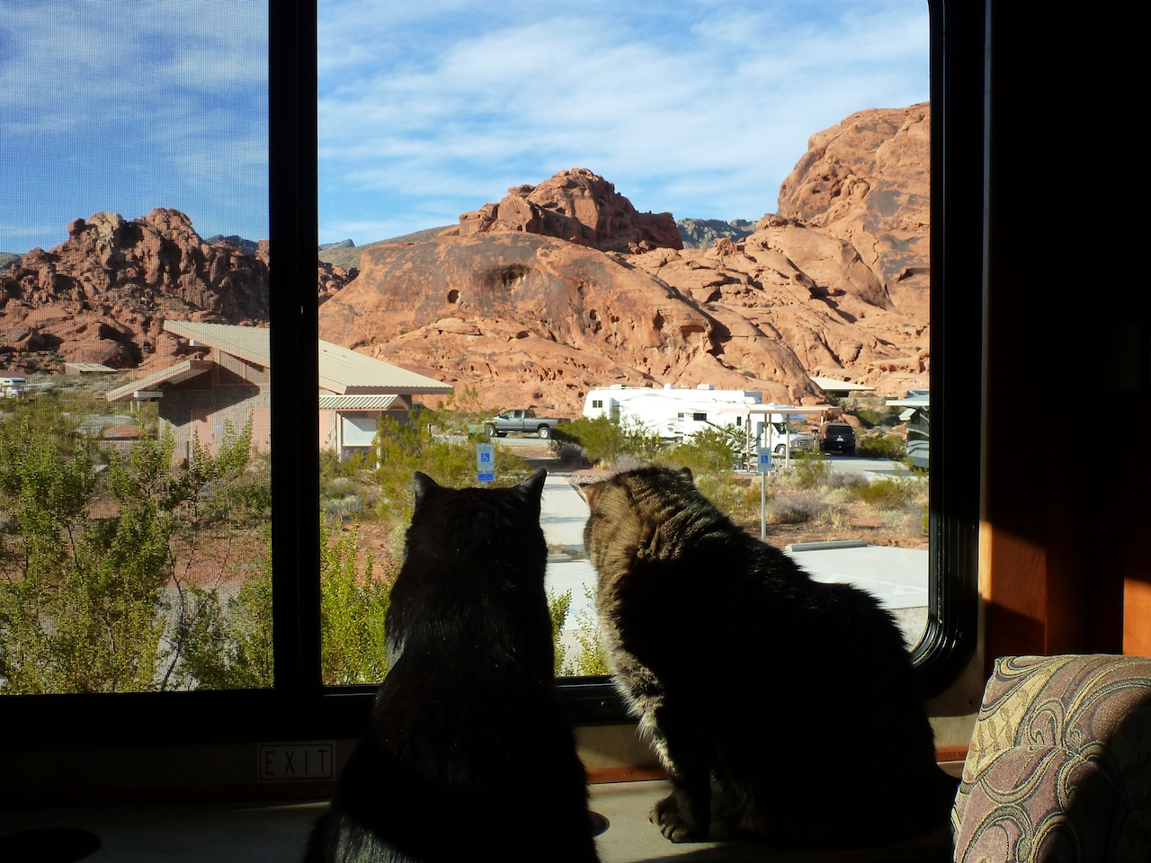 BK And Whisper Taking In The View