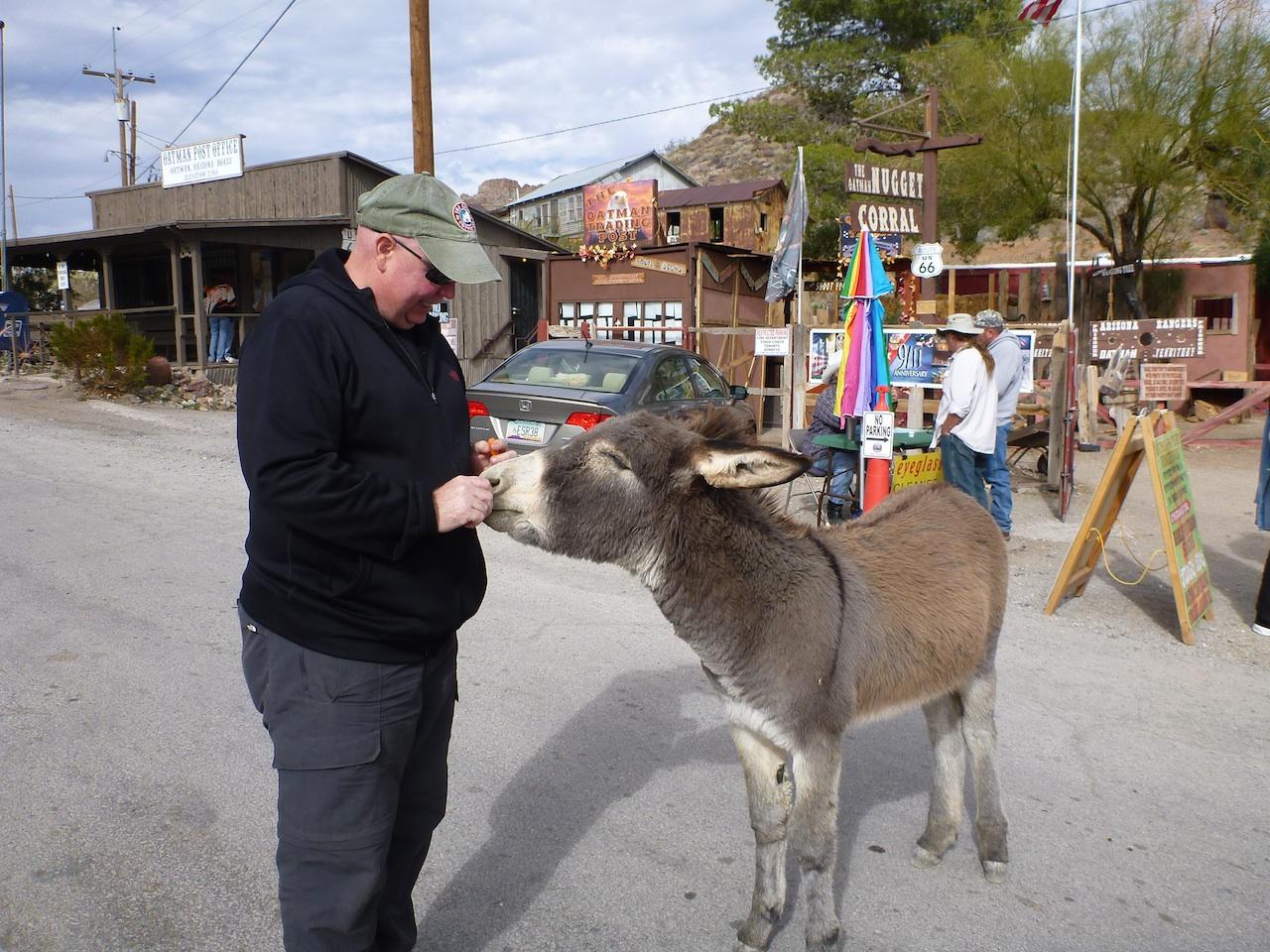 David Feeding A Burro In Oatman, AZ
