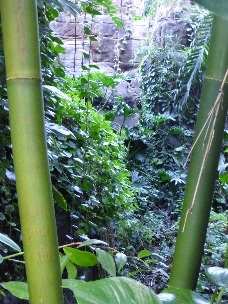 The Tropical Rain Forest In The BioSphere 2 Building