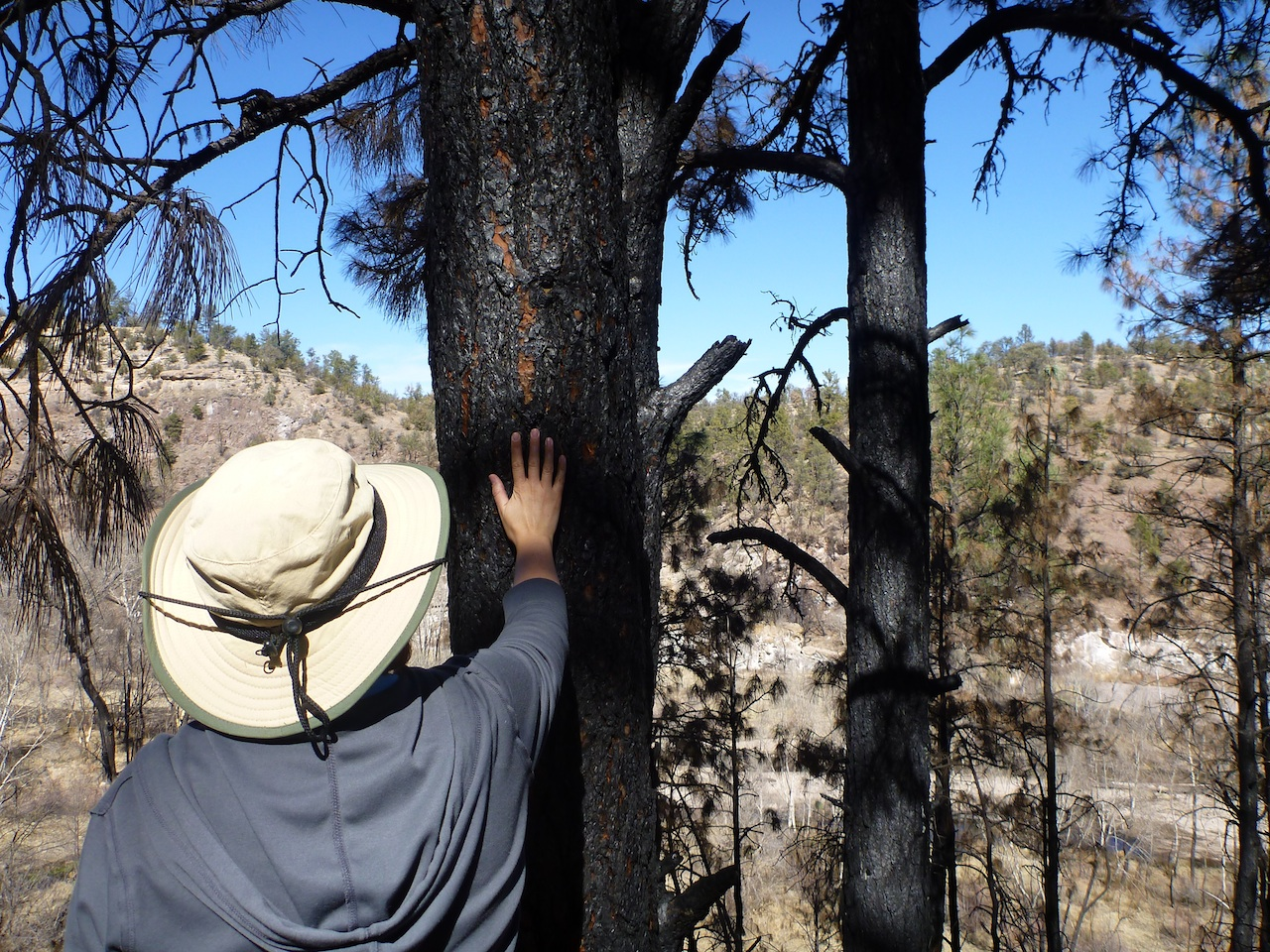 Brenda Touching A Tree That Had Burned In The 2011 Fires That Swept Through The Forest.