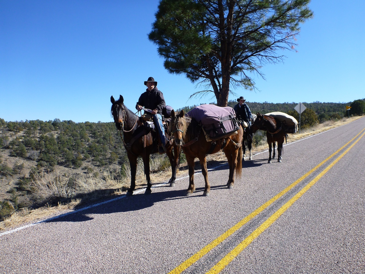 Horse Back Riding And Camping In The Gila National Forest.
