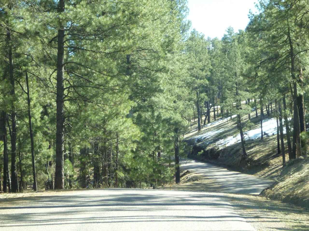 Beautiful Road Through The Gila National Forest