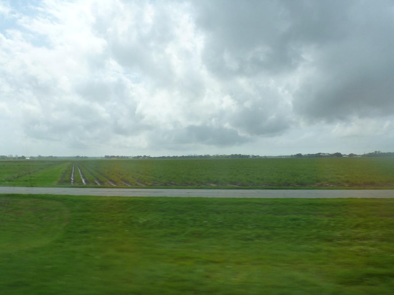 Some Farmland Around The Area