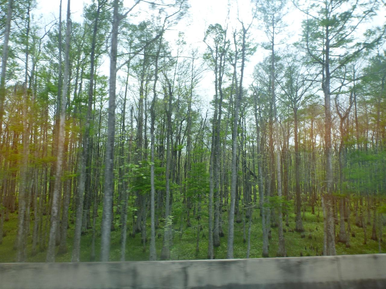 The Swamp Land Driving Down To Houma, LA