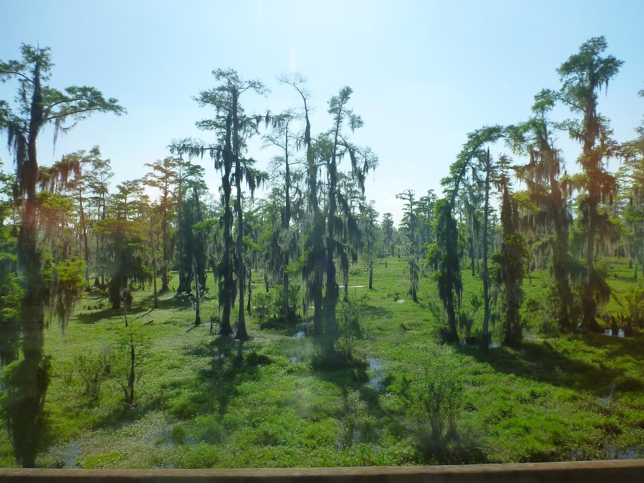 The Louisiana Swampland