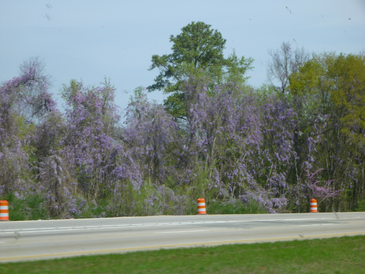 Beautiful Wildflowers That Grow Plentiful In Louisiana And Mississippi